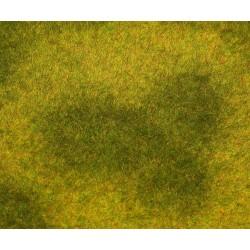 180488 Łąka z wysoką trawą - Premium
