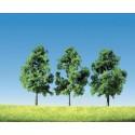 drzewa średnie (10-13cm)