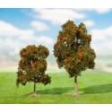 drzewa niskie - (do 10cm)