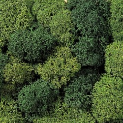 Noch 08621, Materiał do robienia drzew, krzewów... Zielony. (mech wyspowy, glony norweskie )