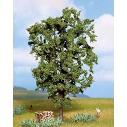 Noch 21800, Kasztan, drzewo o wys.ok.19 cm