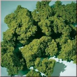 Auhagen 76975, Pianka morska zielona.