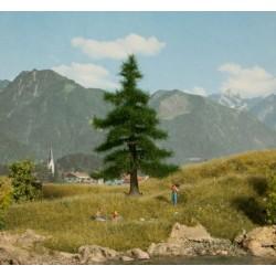 Noch 21810, Jodła Nordmanna, drzewo o wys.ok.12 cm.