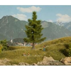 Noch 21815, Świerk, drzewo o wys.ok.12 cm.