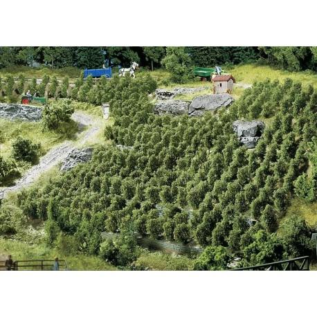181490 Winorośl (lub małe drzewka)