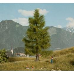 Noch 21816, Świerk, jodła, drzewko wys. ~14,5 cm.
